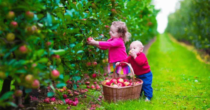 Memetik Buah Apel